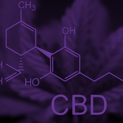 Cannabis-CBD-purple-sq